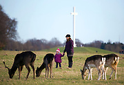 "Mother and daughter look at Fallow Deer (Dama dama) grazing on the ""15 acres"" in the Phoenix Park, Dublin, with the papal cross in the background. There's been a herd here since the 17th century. They live completely wild elsewhere in Ireland, and were introduced by the Normans in the 12th century."