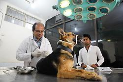February 6, 2018 - Dhaka, Bangladesh - Bangladeshi doctors treat a dog in an animal hospital in Dhaka on February 6, 2018. (Credit Image: © Mehedi Hasan/NurPhoto via ZUMA Press)