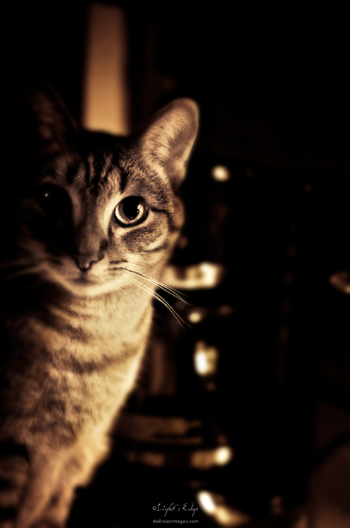 Portrait of one of our cats.