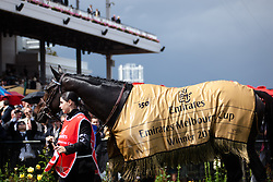 Melbourne cup winning horse 'Americain' does parade lap around the mounting yard.