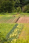 Landscape view of Dancing Roots Farm.
