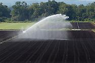Pine Island, New York - Irrigation water sprays over a Black Dirt farm field on Aug. 24, 2012.