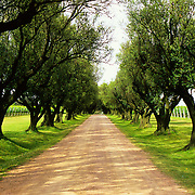 South America, Uruguay; Canelones.Entrance to traditional family winery.