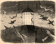 Bird Migration. The lantern of the Eddystone lighthouse built on the Stone 13 miles South-east of Polperro, Cornwall, England, being used to observe migrating birds.  This practice began in the Autumn of 1878. The pun on Edison's name in the caption is because in September 1878 Thomas Alva Edison said he would invent a safe, mild and cheap electric light which would supersede gaslight in millions of dwellings. The Eddystone light was oil. Cartoon by Charles Samuel Keene (1823-1891) from 'Punch'.