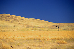Northern California Field With Windmill
