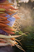 Organic carrots on sale at the Farmers Market in Boulder, Colorado.