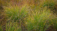 Takh Takh Meadow in autumn, Gifford Pinchot National Forest, Cascade Mountain Range, Washington, USA in autumn, Cascade Mountain Range, Washington, USA panorama