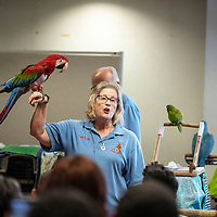 Carolyn Newell of Exotics of the Rainforest holds up Shamrock, a greenwing macaw during an educational presentation by Exotics of the Rainforest at the Octavia Fellin Public Library Children's Branch Wednesday, June 5 in Gallup. Newell founded Exotics of the Rainforest in 1992.