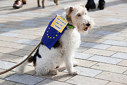 "© Licensed to London News Pictures. 07/10/2018. London, UK. Celeste sports a sign say she is not a fan of Liam Fox as she walks with pro-remain dog owners on a march to Parliament to demand a ""People's Vote"" on the final Brexit agreement.  Photo credit: Peter Macdiarmid/LNP"