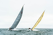 Wild Horses and Mustang sailing in the Opera House Cup.