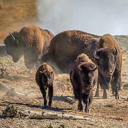 Tetons / Yellowstone