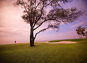 An interesting tree on the beach golf course in South Carolina.