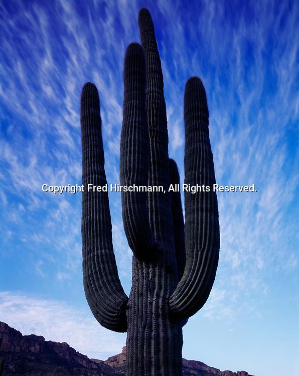 Cirrus sky behind Saguaro, Horse Mesa, Superstition Mountains, Arizona.