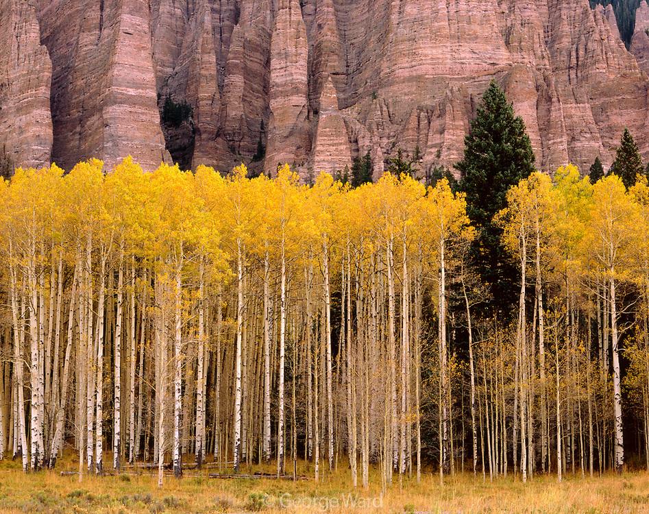 Aspen near Silver Jack Reservoir, Uncompahgre National Forest, Colorado