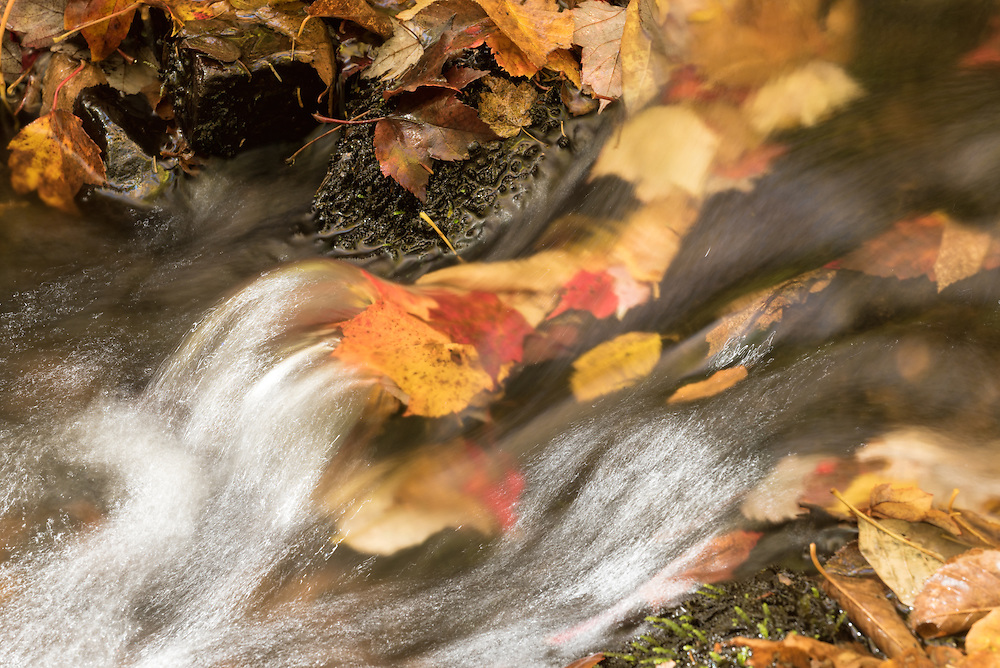 Small stream flowing over leaves in Vermont's Green Mountains.