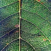 Macro photo of leaf