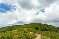 Hiking Balds & Knobs, Art Loeb Trail, Great Smoky Mountains, near Asheville. Photo taken July 27, 2018.