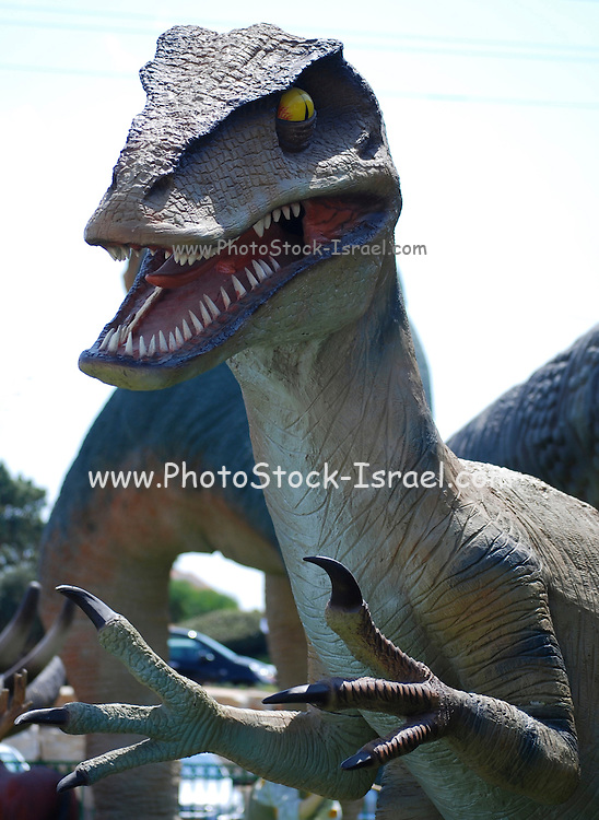 Adult Velociraptor