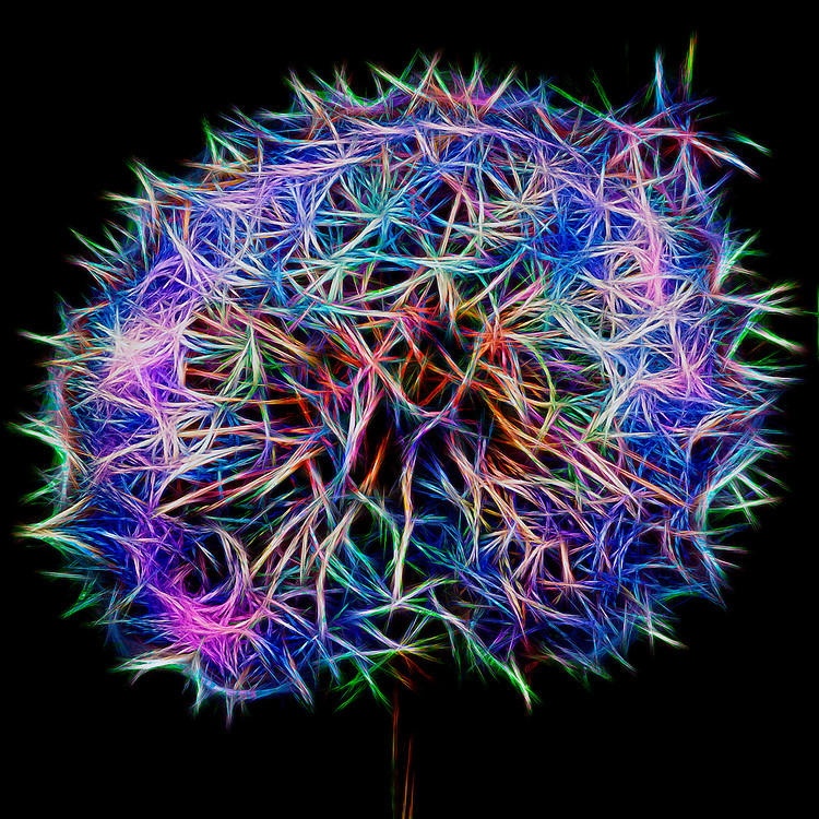 Magic Puff - A White Puffy Dandelion Abstraction - A little bit of fun color, magic and mystery.