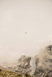 Eagle flying over snow capped mountain in misty morning, Austrian Alps, Carinthia, Austria