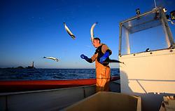 UK ENGLAND CORNWALL SENNEN COVE 11JUN08 - Handline fisherman Will Treneer (19) of Newlyn lands a string of Mackerel off the coast of south-west Cornwall on his boat, the Cornish Rose...jre/Photo by Jiri Rezac / WWF UK..© Jiri Rezac 2008..Contact: +44 (0) 7050 110 417.Mobile:  +44 (0) 7801 337 683.Office:  +44 (0) 20 8968 9635..Email:   jiri@jirirezac.com.Web:    www.jirirezac.com..© All images Jiri Rezac 2008 - All rights reserved.