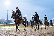 November 1-3, 2018: Breeders' Cup Horse Racing World Championships. Hunting Horn (IRE)