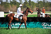 27 March 2010 : Brian Crowley and ARCADIUS take a look at the landing side of the fence before the start of the Woodward Kirkover hurdle race.