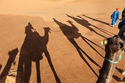 Camel caravan, Erg Chebbi, Saharan Desert, Morocco