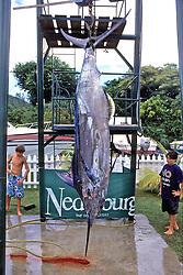 Caught Blue Marlin