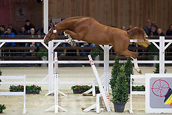 079, Interadel BH<br /> BWP Hengsten keuring Koningshooikt 2015<br /> © Hippo Foto - Dirk Caremans<br /> 23/01/16
