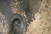 Vespasiano_MG, Brasil...Espetaculo do Circo Estoril em Vespasiano, Minas Gerais...Spectacle of Estoril circus in Vespasiano, Minas Gerais...Foto: MARCUS DESIMONI / NITRO......FOTO: Marcus Desimoni / Agencia Nitro.............