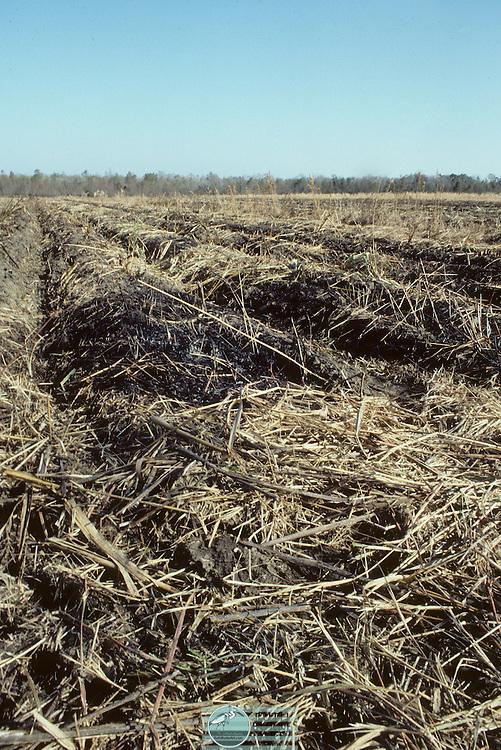 Farming and harvesting sugar cane in Louisiana, USA.