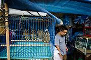 Owls in Animal market<br /> Jatinegara Animal market<br /> Jakarta<br /> Indonesia