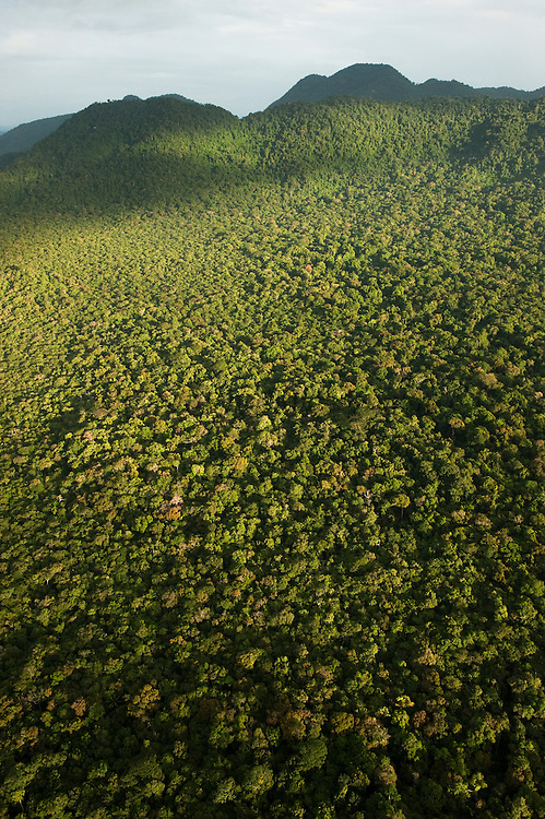 Aerial View of Rainforest<br /> Iwokrama Reserve<br /> GUYANA<br /> South America