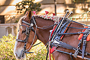 A horse decorated for Christmas pulls a carriage in historic Savannah, GA.