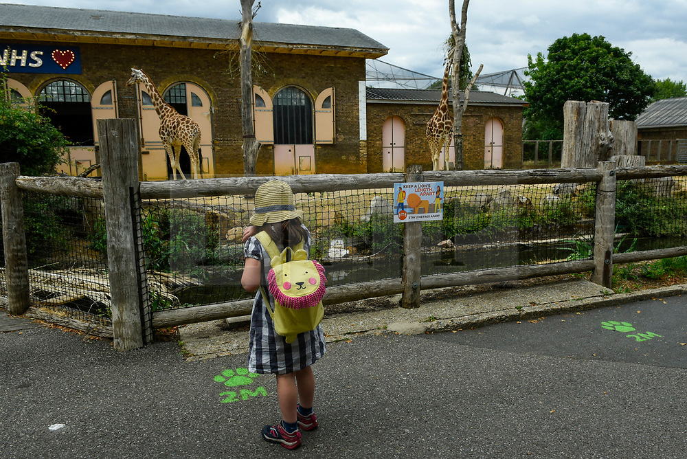 © Licensed to London News Pictures. 15/06/2020. LONDON, UK. A young visitor, next to social distancing signs, view giraffes, Mollie and Maggie, on the reopening day of ZSL London Zoo, the first day that the zoo has been open to the public since March following the coronavirus pandemic lockdown. The staff have applied social distancing signage around the premises for the safety of visitors. The UK government has relaxed Covid-19 restrictions allowing non-essential shops, zoos and safari parks to reopen to the public from 15 June.  Photo credit: Stephen Chung/LNP