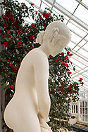 A marble statue called 'A Girl at the Bath' by AJ Wyatt next to red Camellias in the conservatory at Chiswick House, Chiswick, London, UK