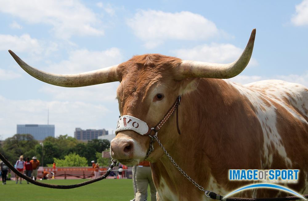 Mar 31, 2018; Austin, TX, USA; Texas Longhorns mascot Bevo at the 91st Clyde Littlefield Texas Relays at Mike A. Myers Stadium.