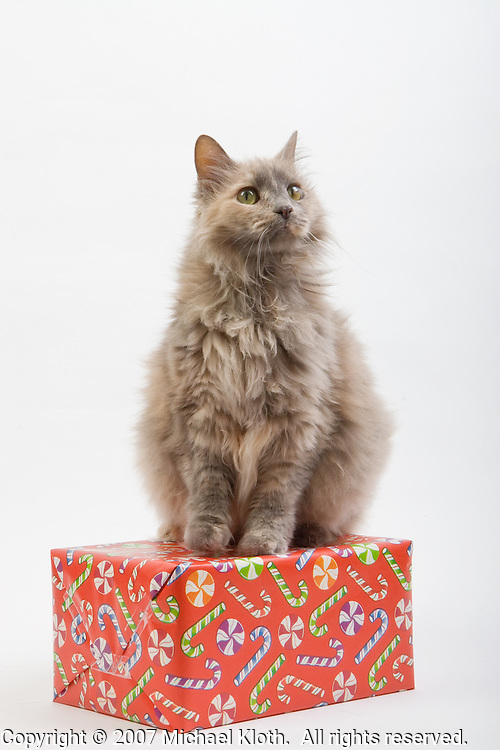 This week's throwback gallery features some of my earliest work with both my dogs and some adoptable and client animals.  This cat was photographed while she was waiting for adoption at the Woodford Humane Society in Versailles, KY.