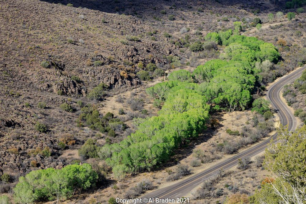 Cottonwoods along Limpia Creek