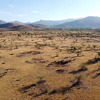 In this arid region of Honduras jicaro trees grow in a parched landscape. Climate change and poor water management is pushing the area from arid to desert.