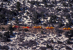 Caravan of large transport vehicles climbing a snowy mountain road