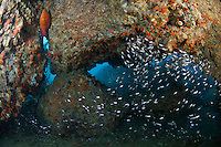 Reef Cavern with Sweepers