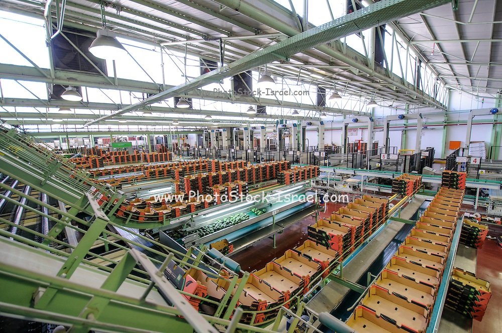 Computerized Avocado sorting and packing plant. Photographed in Israel Cardboard boxes ready for the selected fruit