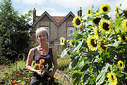 """Rachel at 'Green and Gorgeous' with British Sunflowers<br /><br />Rachel is the owner of """"Green and Gorgeous"""" Flower Farm in Oxfordshire. She is well known for the flower arranging courses she offers. Her flower farm also caters for events, weddings and private picking<br /><br />British local flowers, grown nearby, count for around 10% of the UK market, traveling less than a tenth of their foreign counterparts which are often flown in from abroad. Nearly 90% of the flowers sold in the UK are actually imported, and many travel over 3000 miles. Local flower farms help biodiversity, providing food and habitat to a huge variety of wildlife, insects including butterflies, bugs, and bees. Often local flower farmers prefer to grow organic rather than using pesticides. British flowers bloom all the year around, even in the depths of winter, and there are local flower farms throughout the country.<br /><br />Many people like the idea of the just picked from the garden look, and come to flower farms throughout Britain to pick their own for weddings, parties and garden fetes. Others come for the joy of a day out in the countryside with their family. Often a bride and her family will come to pick the flowers for her own wedding, some even plant the seeds earlier in the year."""