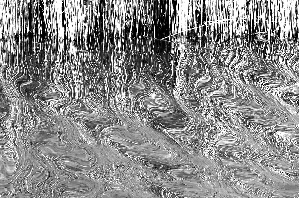 Black & White reeds reflected in water, swirly patterns
