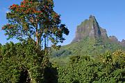 Mount Mouaroa (Shark's Tooth), a mountain on Moorea, Society Islands, French Polynesia