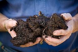 Handful of garden compost