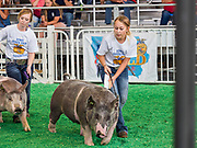 08 AUGUST 2019 - DES MOINES, IOWA: ALIVIA VANRYSWYK, right, from Chariton, Iowa, shows one of her hogs on the first day of the Iowa State Fair. The Iowa State Fair is one of the largest state fairs in the U.S. More than one million people usually visit the fair during its ten day run. The 2019 fair run from August 8 to 18.         PHOTO BY JACK KURTZ
