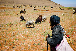 Shepherds with their flock of goats and sheep in the Atlas Mountains, Morocco<br /> <br /> (c) Andrew Wilson   Edinburgh Elite media